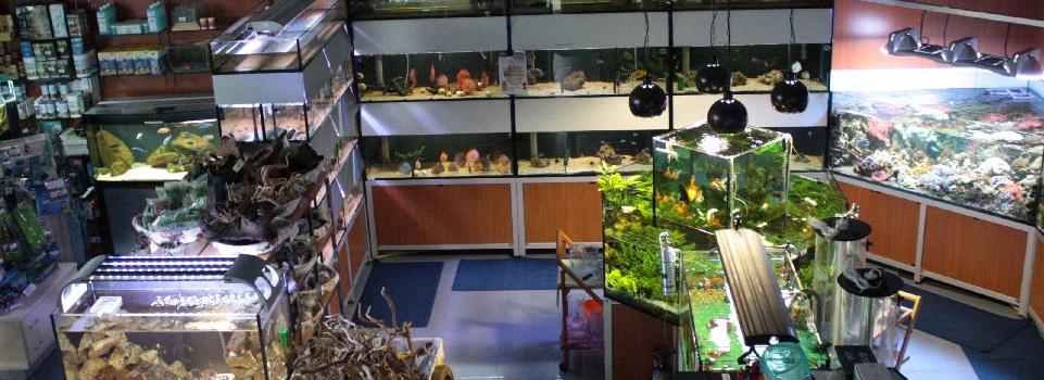 Tropical acquarium vendita pesci ornamentali acquari e for Vendita pesci